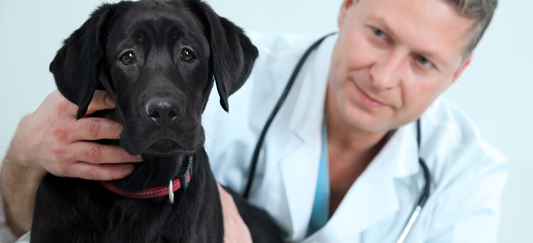 Ветпомощь животному - хирургическое вмешательство
