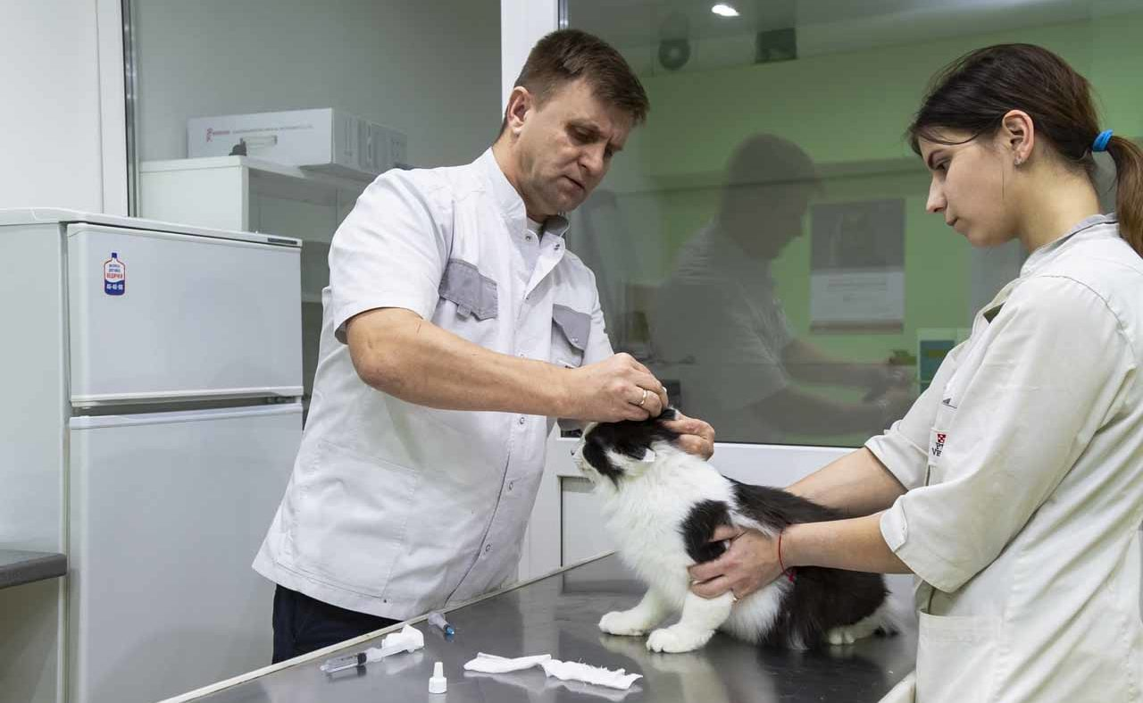 Профилактика болезней, дающих осложнения при родах у собак и родах у кошек